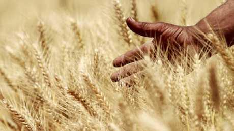 محاصيل مصرية