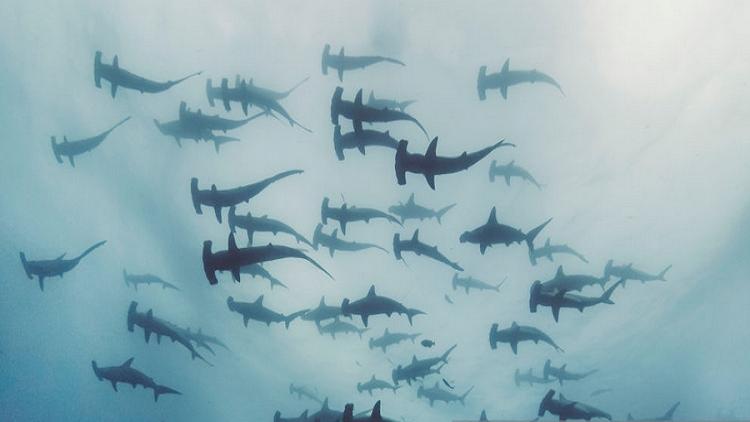 اكتشاف مخلوقات بحرية