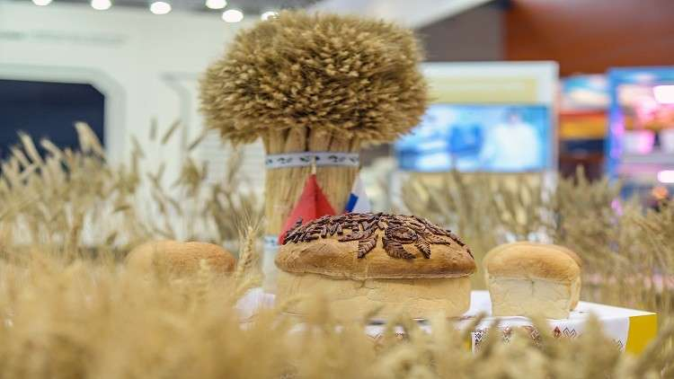 قيمة الصادرات الزراعية الروسية قد تبلغ 50 مليار دولار عام 2024