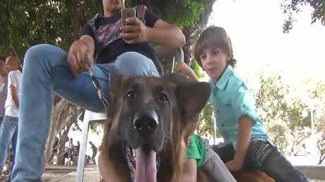 في غزة... مبادرة صديقي الحيوان