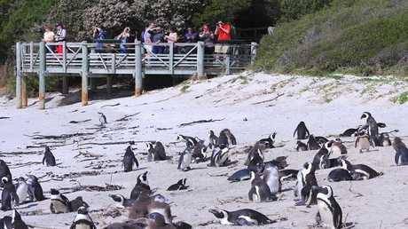 أعداد البطريق تتناقص في القطب الجنوبي