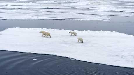 ذوبان جليد القطب الشمالي يزيد من ظاهرة الاحتباس الحراري