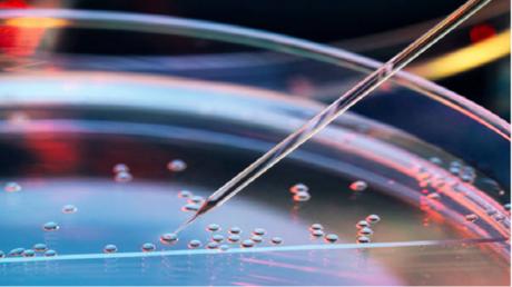 ثورة عالم الطب .. الخلية الجذعية المعجزة!
