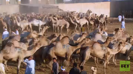 برقاش.. أشهر أسواق الجمال في مصر