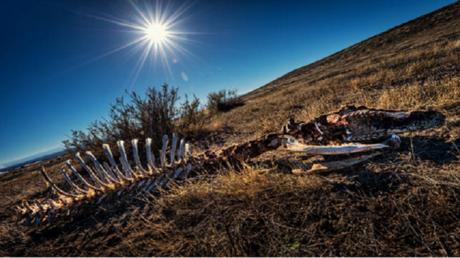 كيف أدى الاحترار العالمي لحدوث انقراضين جماعيين في تاريخ الأرض