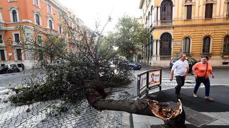 شجرة أسقطتها رياح قوية في روما