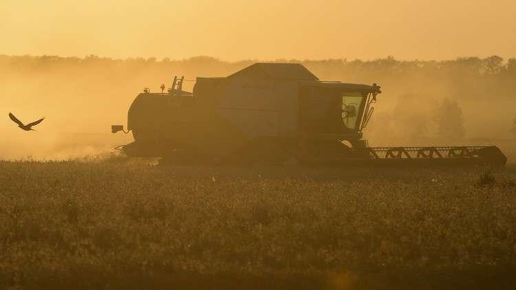 سورية يمكن أن تلعب دورا مهما في تجارة القمح الروسي