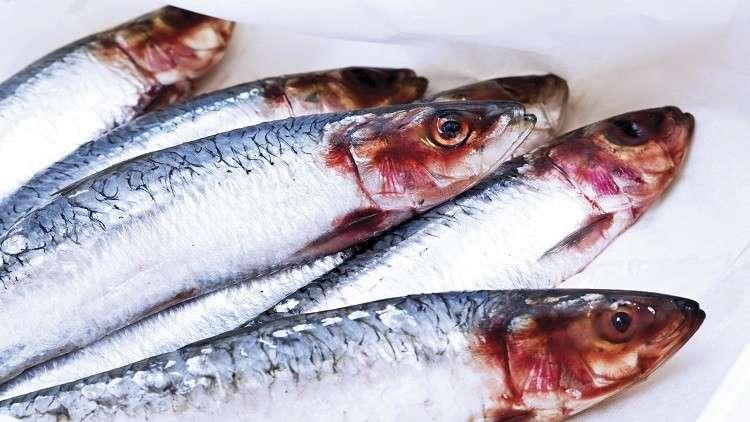 روسيا..اكتشاف السمكة الأكثر فائدة للإنسان