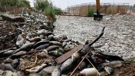 نفوق الأسماك في العراق