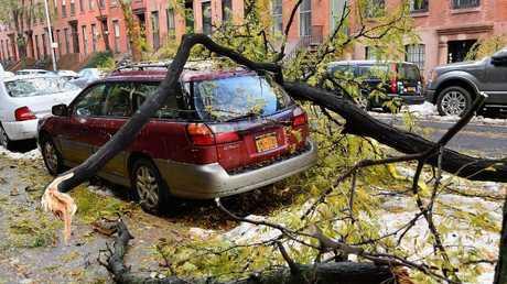 سقوط شجرة على سيارة بعد عاصفة ثلجية في نيويورك