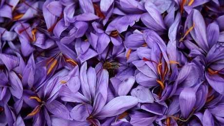 زهرة الزعفران
