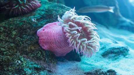 لماذا نشأت أولى الكائنات الحية المعقدة على الأرض في أعماق المحيطات؟