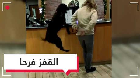 كلب يقفز 47 مرة خلال دقيقة!.. لماذا؟