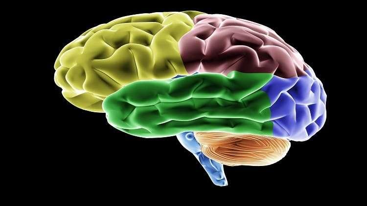 كشف أهم أسرار دماغ الإنسان!