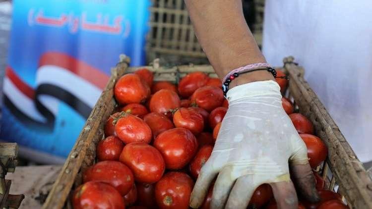 نقيب الفلاحين يكشف عن كارثة خطيرة في بذور طماطم (023) تنتظر مصر