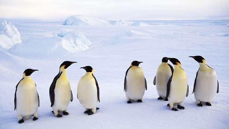 اكتشاف بقايا غامضة لكائنات حية في القارة القطبية الجنوبية