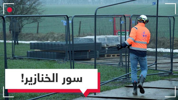 الدنمارك تبدأ في بناء جدار على حدودها مع ألمانيا خوفا على خنازيرها