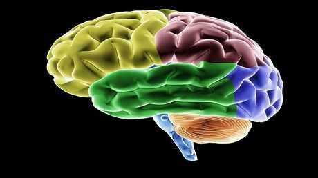حل السر الرئيسي لدماغ الإنسان