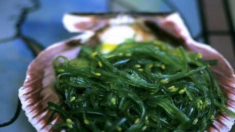 الأعشاب البحرية غنية بالبروتينات