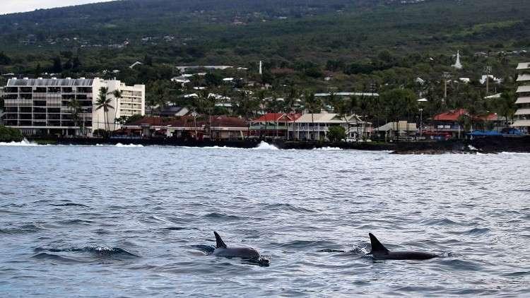دلافين تسبح بالقرب من أحد السواحل - أرشيف