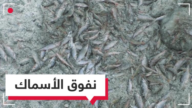 بالفيديو.. ملايين الأسماك تتجمد في نهر بروسيا