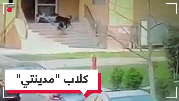 فيديو صادم.. طفل مصري يتعرض لهجوم كلاب ضالة!