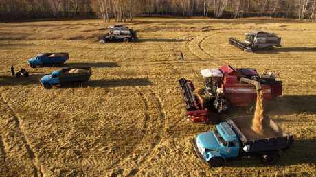 روسيا تتوقع حصاد 118 مليون طن من الحبوب