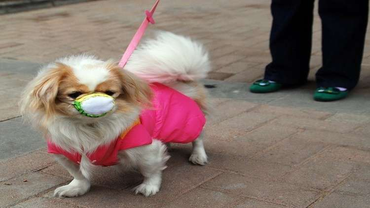إنفلونزا الكلاب الجديدة قد تكون مميتة للبشر
