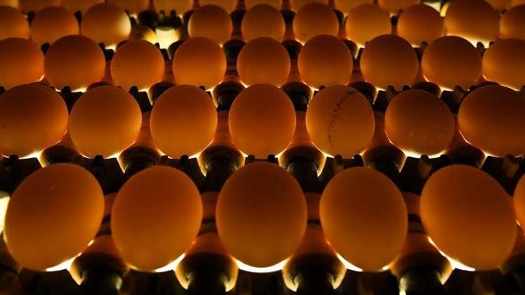 مصر تصدّر 1.08 مليون بيضة للبحرين