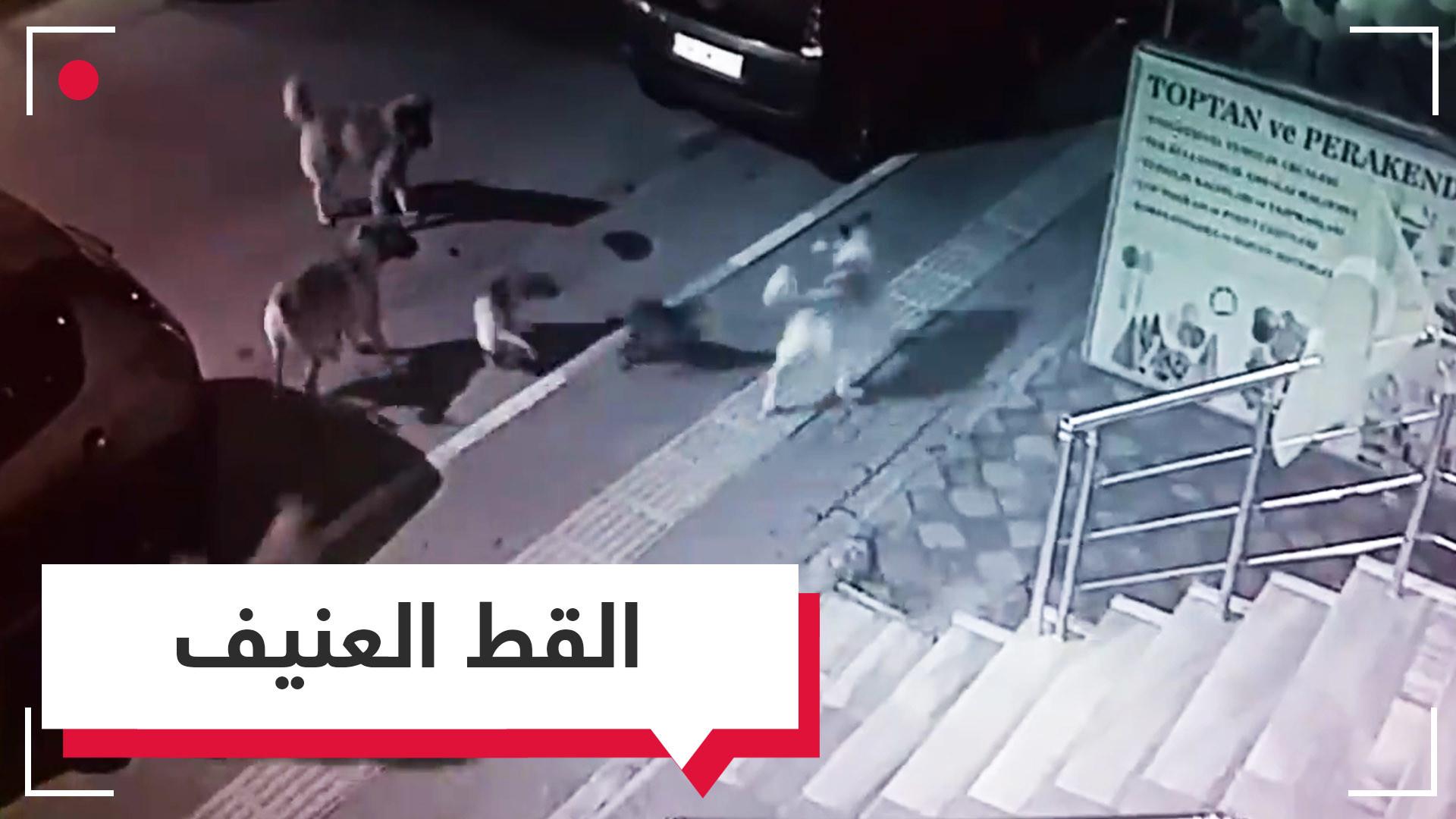 من سينتصر؟.. قط يواجه بمفرده قطيعا من الكلاب في شارع بتركيا