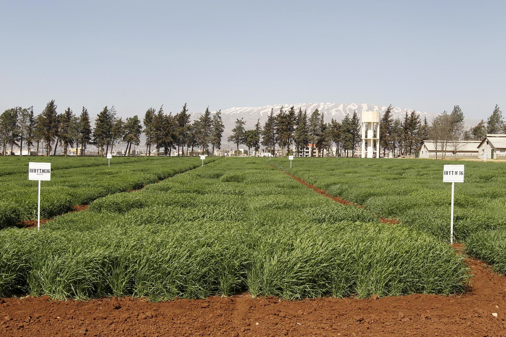 غزو الحشرات يصل دمشق وريفها .. و