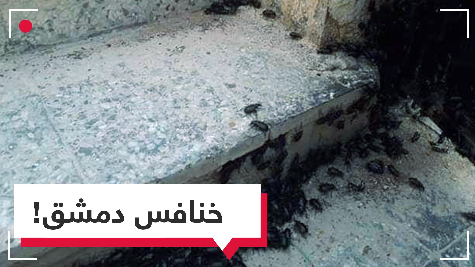 بعد البنزين.. الخنافس أزمة السوريين الجديدة التي تزحف نحو دمشق!