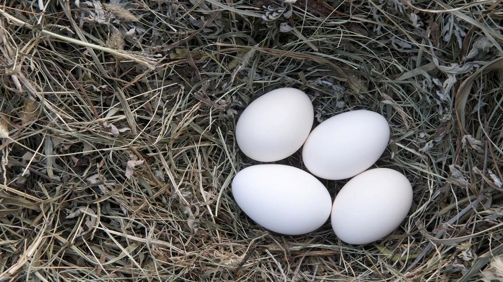 البيض يحمي من الضمور البقعي