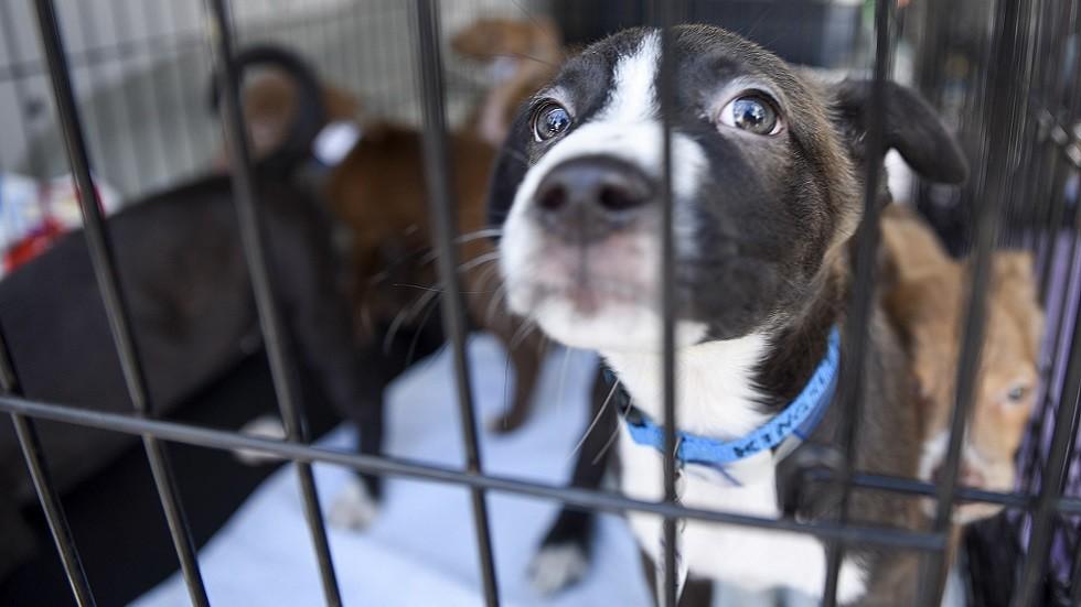 الولايات المتحدة تعلق استيراد الكلاب من مصر