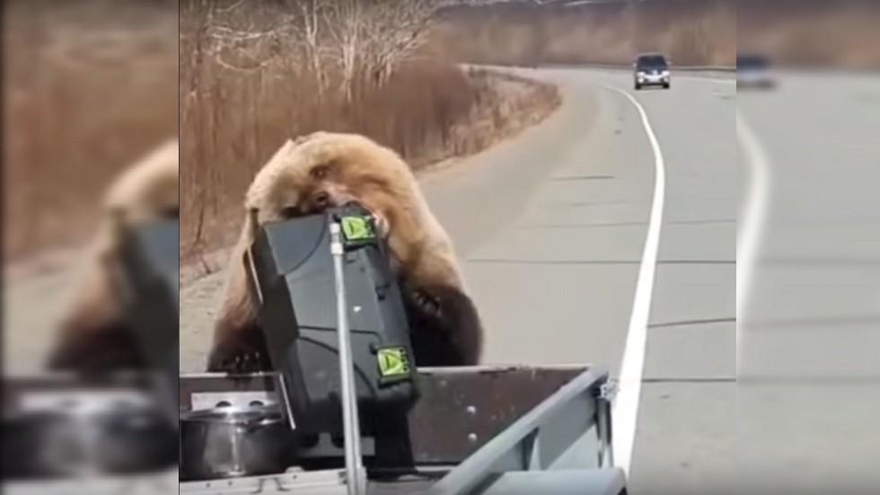 فيديو لدب يسرق من صيادين ثلاجة لحفظ الأطعمة