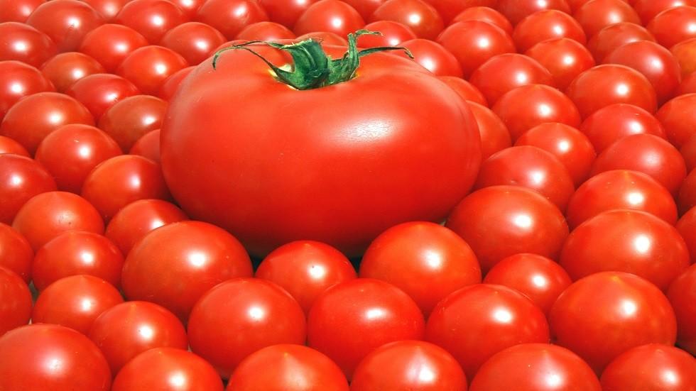 تناول الطماطم يخفض خطر تطور سرطان الجلد