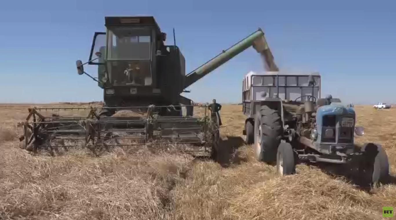 انتعاش موسم حصاد القمح في سوريا  -