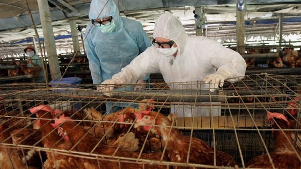 ابتكار طريقة جديدة للحد من إنفلونزا الطيور
