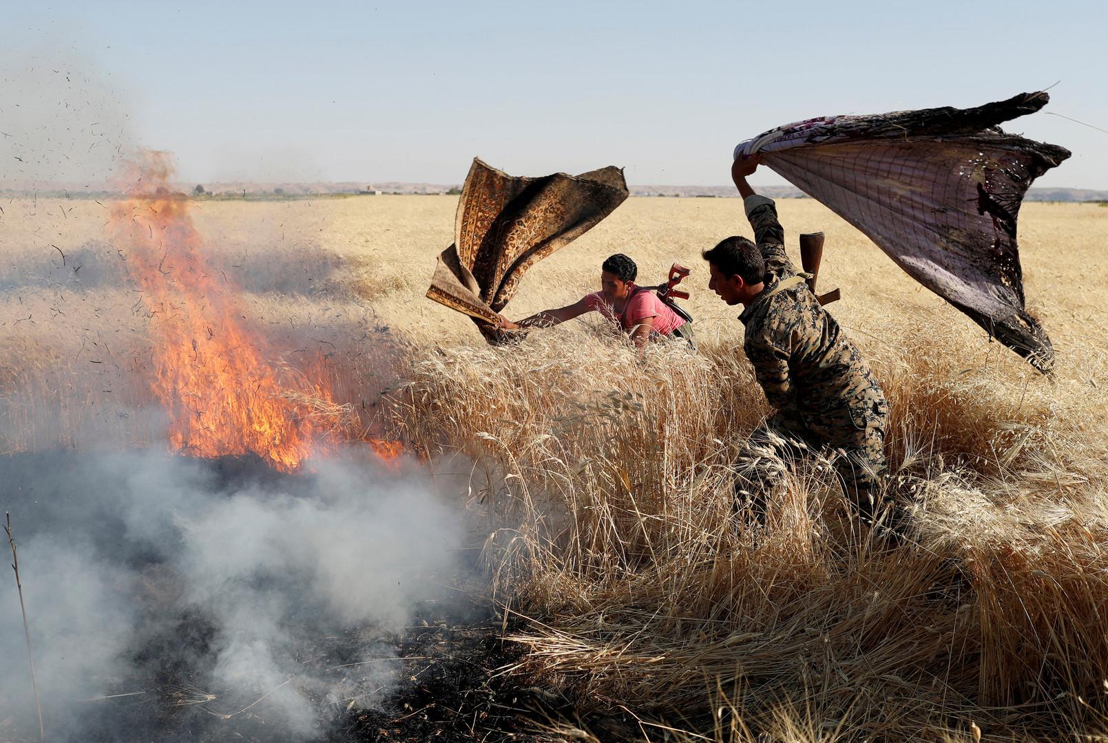 يزرعون القمح .. ويحصدون الرماد:حرائق مجهولة الفاعل في سوريا