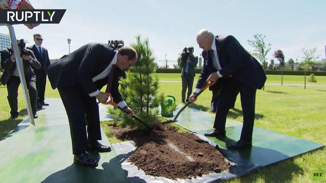 شاهد.. السيسي تزرع شجرة مع لوكاشينكو في مينسك