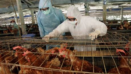 Creating a new way to reduce avian influenza
