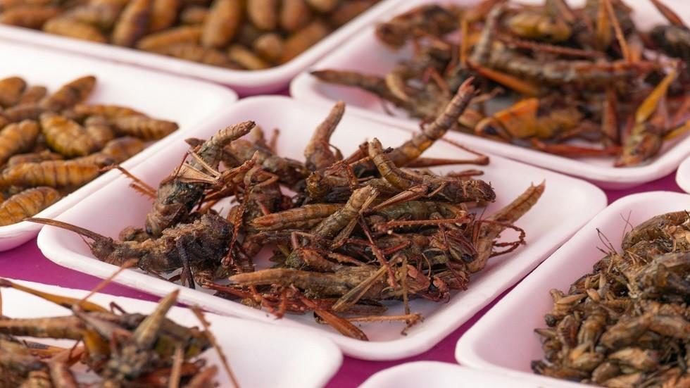 """نتيجة بحث الصور عن أكل الحشرات """"يحميك"""" من أحد أخطر أمراض العصر!"""