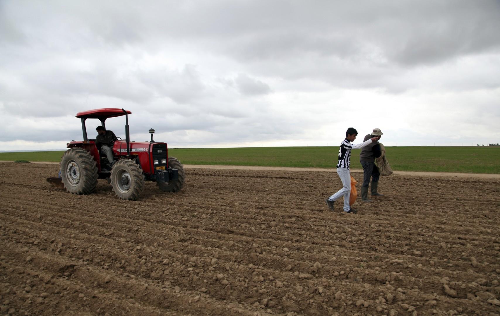العراق بصدد تحقيق الاكتفاء الذاتي من القمح