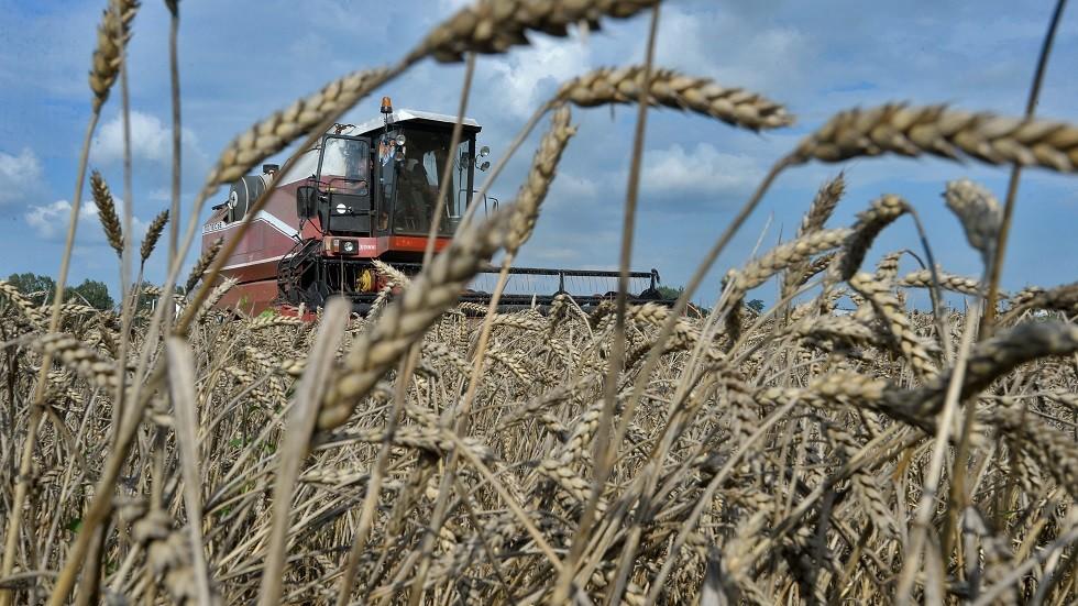 مزارع القمح - أرشيف