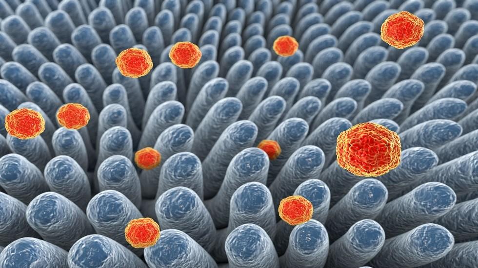 دراسة: فيروس أمعاء
