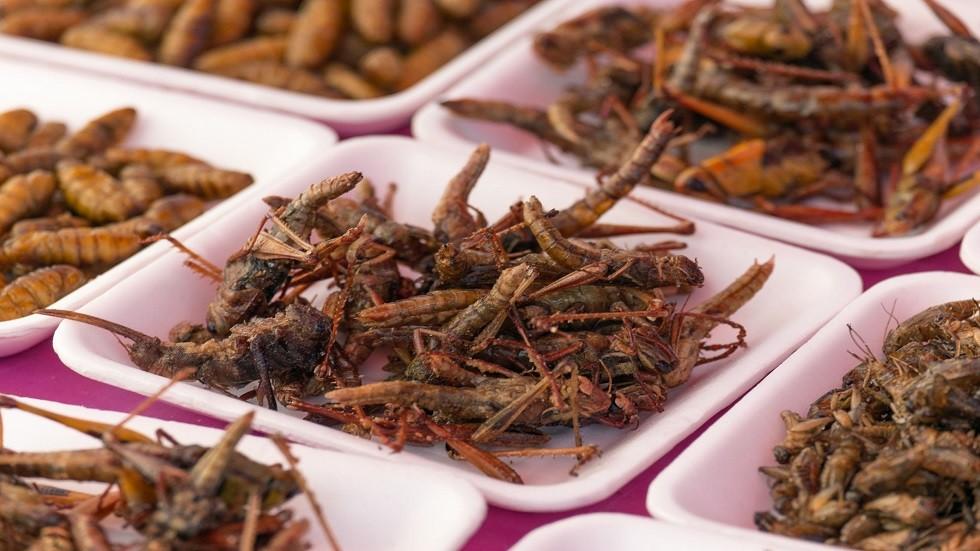 دراسة مثيرة.. أكل الحشرات