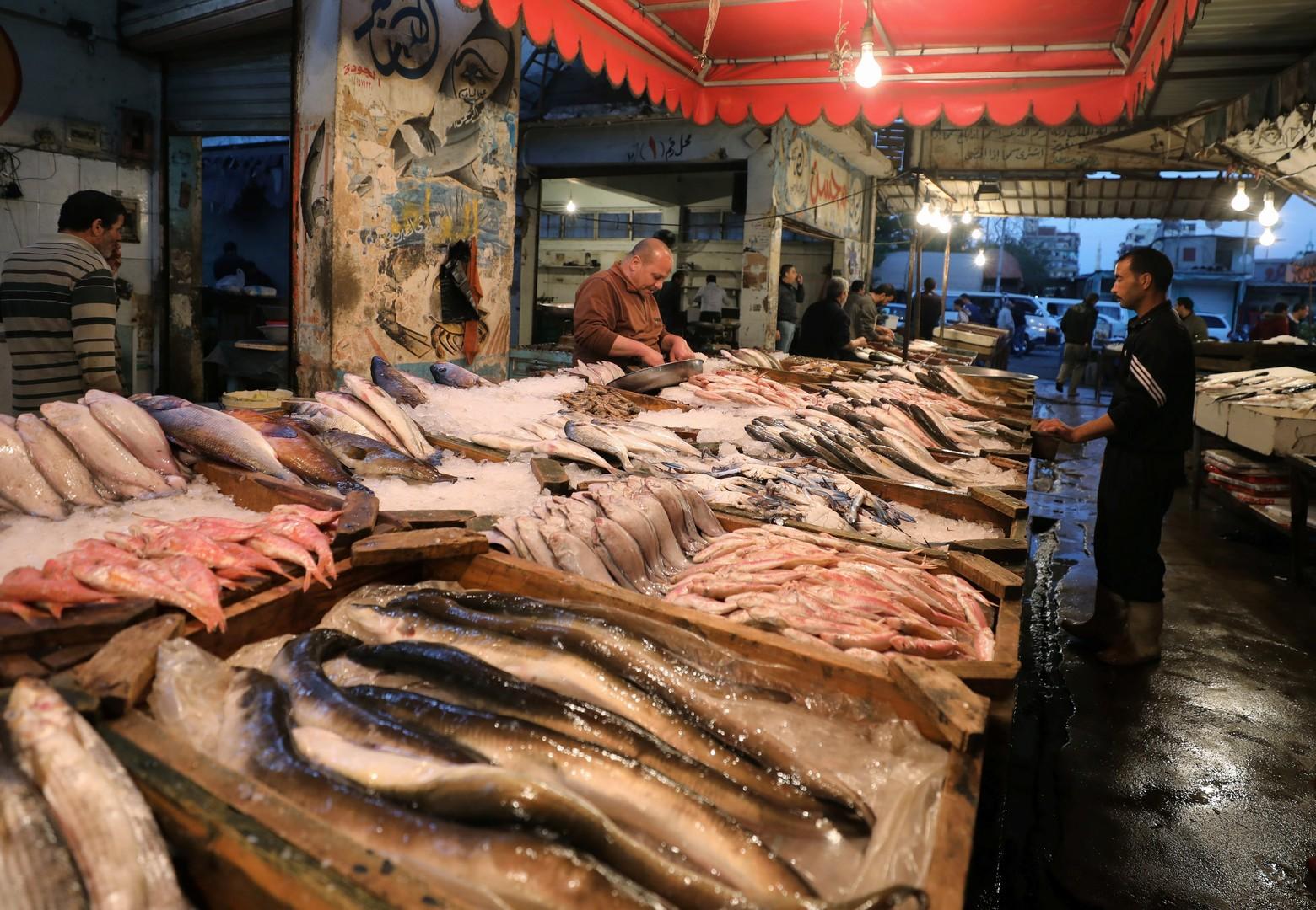 الزراعة المصرية: قريبا طرح أسماك بأسعار منخفضة في الأسواق (صور)