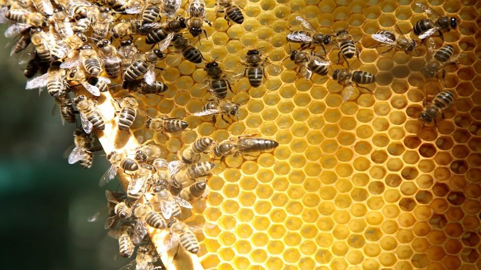 الكشف عن سبب اختفاء النحل في روسيا