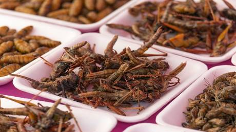 """An interesting study .. Eating insects """"protect you"""" from one of the most serious diseases of the times!"""