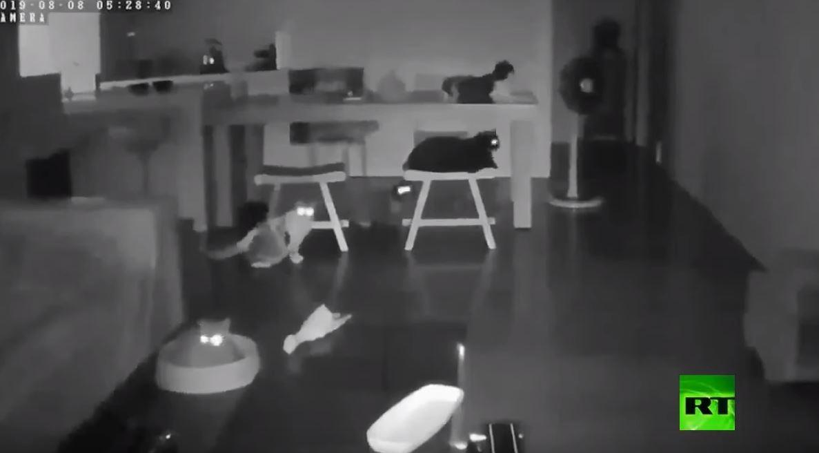قطط تتنبأ بزلزال وتشعر به قبل وقوعه بثوان